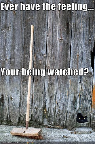 funny-pictures-cat-watches-you