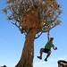 Quiver Tree & Giants Playground