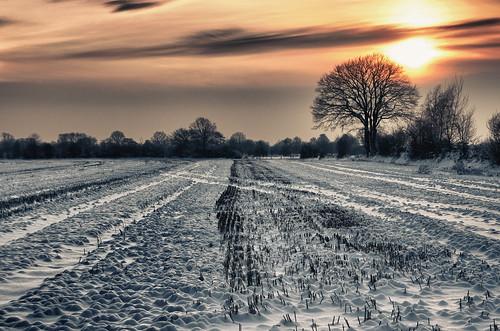 winter sunset snow landscape deutschland sony nik tamron deu hdr schleswigholstein a700 rosenkamp nortorf alpha700 hdrefexpro