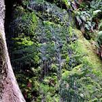 Cecilia Waterfall