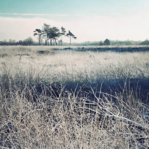 trees winter snow cold grass landscape denmark vinter frost branches træer wetlands rim bog danmark 2010 sne grene mose kolding landskab græs højmose svanemosen canoneos5dmrkii theswanbog