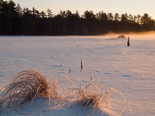 morning trees winter mist snow cold ice water grass forest sunrise landscape dawn frozen pond woods nh beaverlodge beaverpond