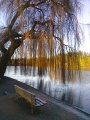Stanley Park - January 2, 2011