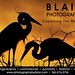 Q.1966 Blair20x3011.29.qxd