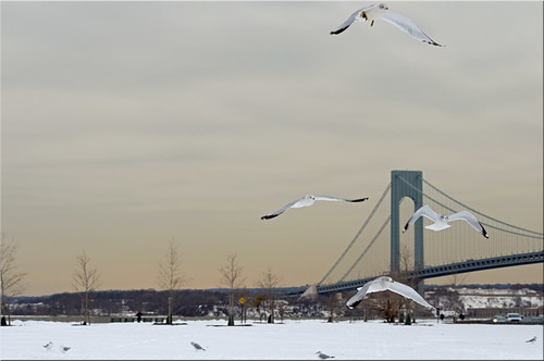 Brooklyn: Verrazano Bridge