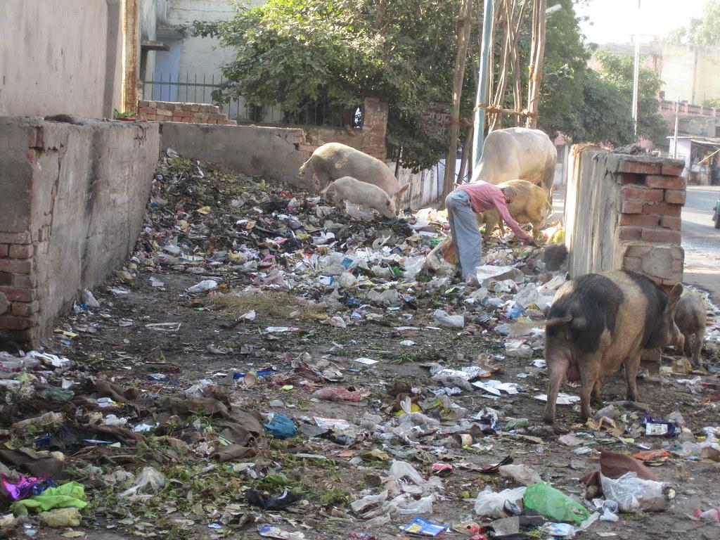 Feed Me - Agra India