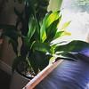 Weekend mornings kick f'ing ass at my house. #lifesogreen #dappledshade #october #greendreams