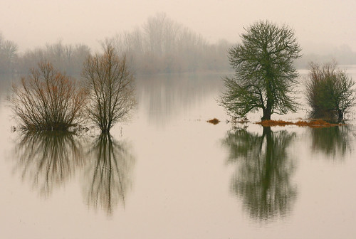 trees winter fog oregon reflections landscape northwest sauvieisland