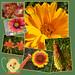 Cynthia's Little Garden Scrapbook