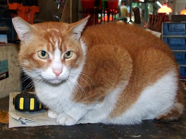 Felidae Cat Food Recall