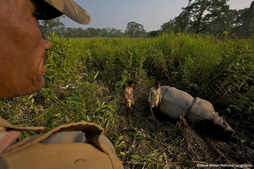 Rangers observe a dead rhinoceros