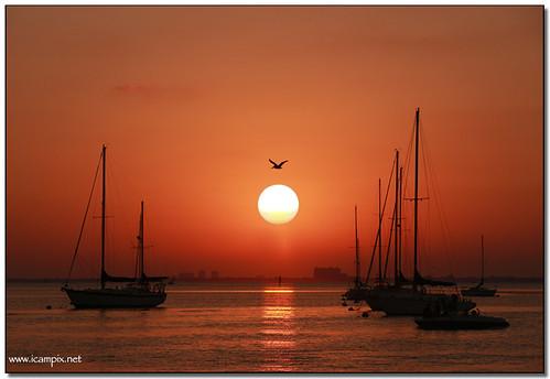 seascape marina boats artshow miamibeach yatchs bigsun topshots sunsetart abigfave crandonparkmarina anawesomeshot colorphotoaward miamiartshow natureselegantshots mostbeautifulsunset xmaxprocessing xmax9510