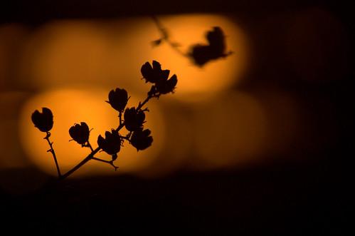 travel sunset usa abstract silhouette austin evening twilight texas bokeh roundrock madhukartha