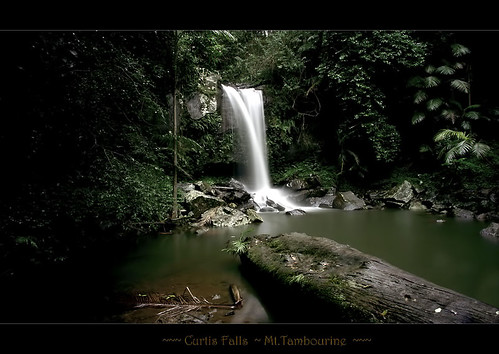 waterfall australia goldcoastqueensland curtisfallsmounttambourine
