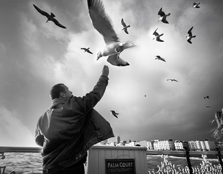 Feeding the Gulls