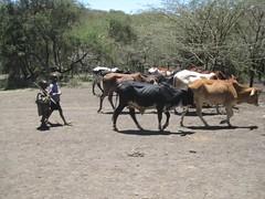 Maasai on safari in Tanzania