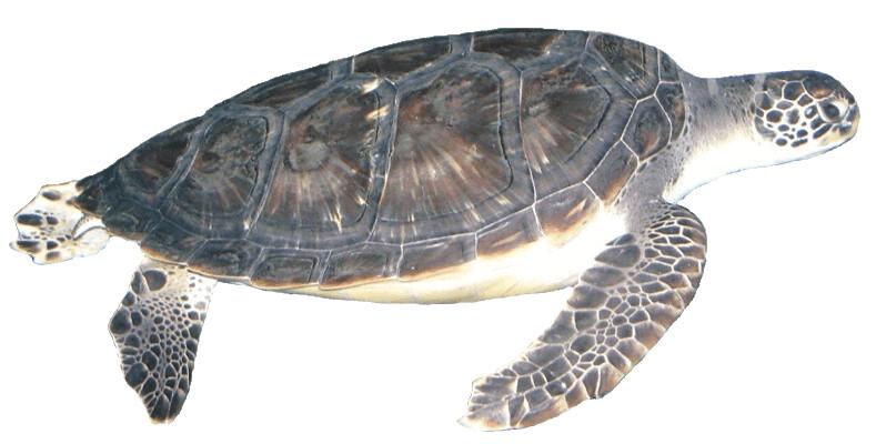 turtle clipart reptile clip art silhouette reptile clip art silhouette