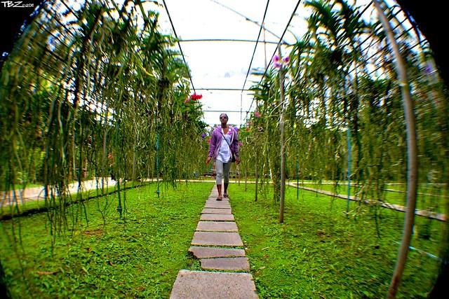 above ground garden flickr photo sharing