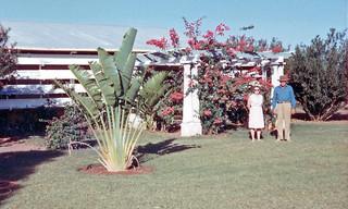 Louisa Downs Homestead - 1965