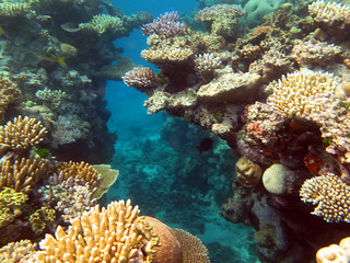 Great Barrier Reef 008