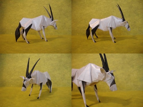 Gemsbok Collage