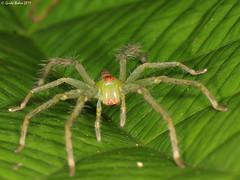 Arachnids - Photo (c) gbohne, algunos derechos reservados (CC BY-SA)