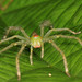 True Spiders - Photo (c) gbohne, some rights reserved (CC BY-SA)