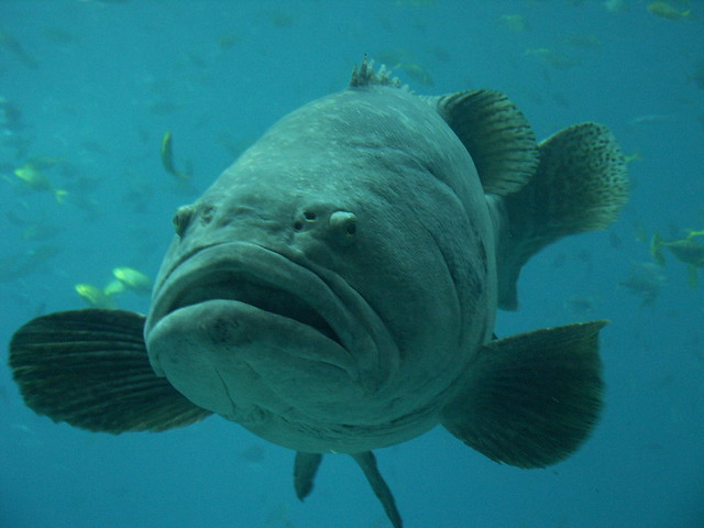 5419491885 67be1083d1 for Big mouth fish