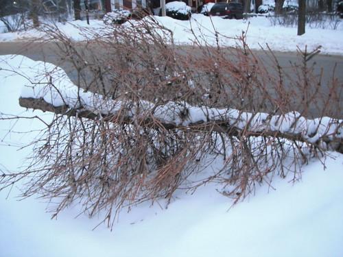 309/365 - Dead Christmas Tree