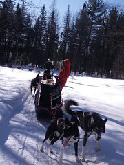 auto racing(0.0), sledding(0.0), animal sports(1.0), racing(1.0), dog(1.0), winter sport(1.0), winter(1.0), vehicle(1.0), sports(1.0), snow(1.0), pet(1.0), mushing(1.0), dog sled(1.0), land vehicle(1.0), sled dog racing(1.0), sled dog(1.0), sled(1.0),