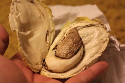 Mango Growing: Seed-To-Pot Tutorial  |Mango Seed Inside