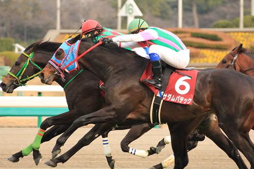 弥生賞勝ち馬 サダムパテック(岩田康誠)