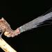 Fiber-optic hopper by Arthur Anker