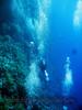 scufundari_scuba-diving_marea_rosie_0099