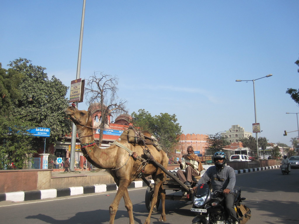 Camel Power India