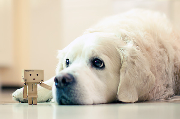 Danboard (danbo) and the dog