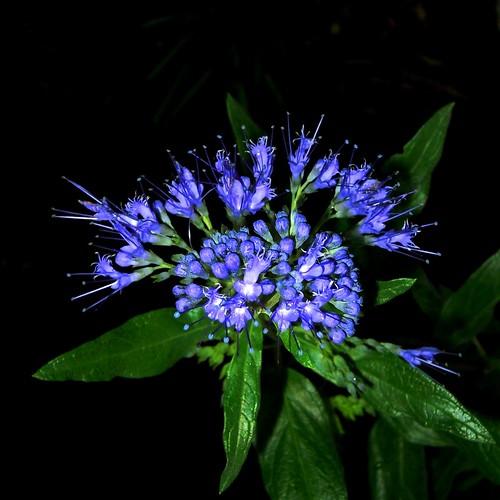 """Фотография: """"BOUQUET en bleu"""" Автор: *P*J*"""