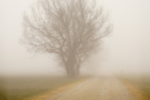Pinhole photography in the foggy Allgäu highlands