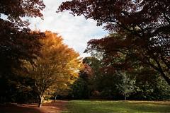 Sheffield Park and Garden 22-10-2010