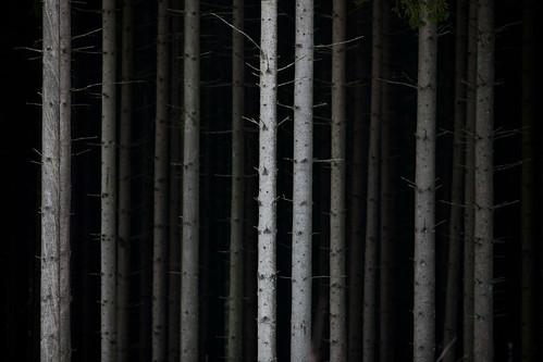 black tree forest skåne sweden fav20 fav30 skåne 2011 höör fav10 f32 ef200mmf28lusm canoneos5dmarkii ¹⁄₅₀₀sek västerstad