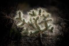 Joshua Tree national park-4.jpg