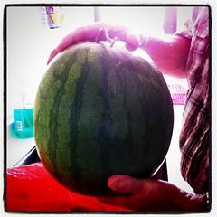 plant(0.0), produce(0.0), watermelon(1.0), fruit(1.0), food(1.0), organ(1.0),