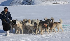 5396342557 e9df4e0202 m What is there to know about dog sled racing?