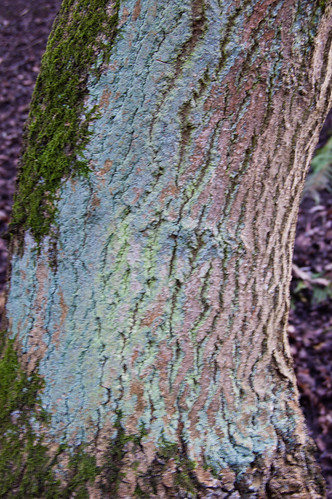 Lichen and moss on a tree trunk