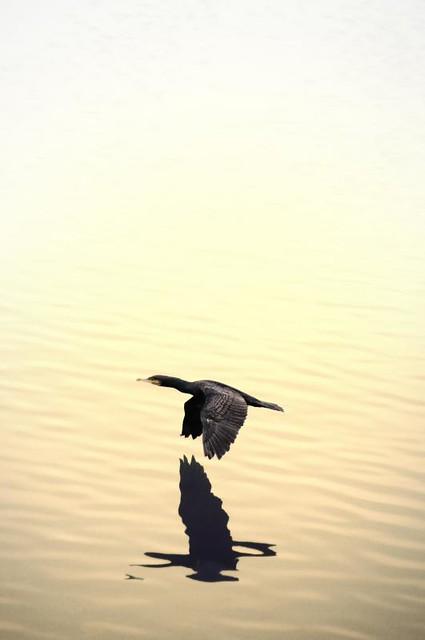 Balade à l'ile de la Platière le 28 01 2011