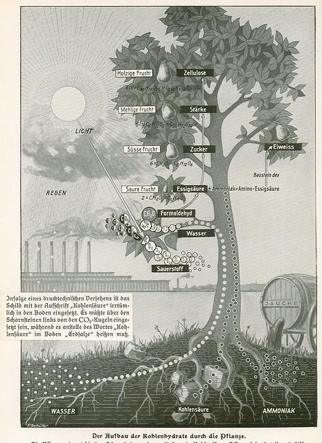 el ciclo del carbón