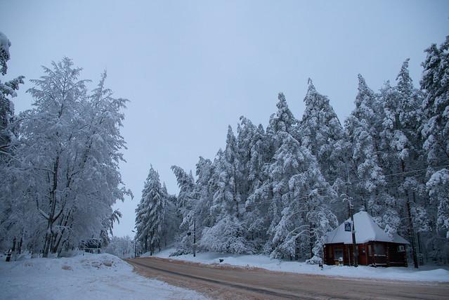 Утро в Пушкинских горах