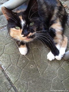 Sun, Apr 13th, 2014 Lost Female Cat - Old Dublin Rd, Shankill, Dublin