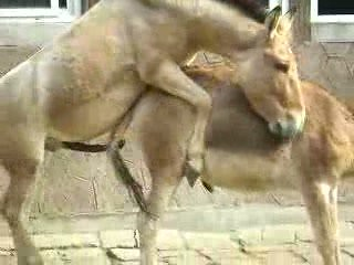 hot horse gloats after sex in Dalian, China zoo ???? ??? ??????, ??? ???, ?