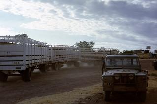 More Road Trains at Louisa Downs - 1968